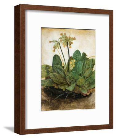 D?Rer: Tuft Of Cowslips-Albrecht D?rer-Framed Premium Giclee Print