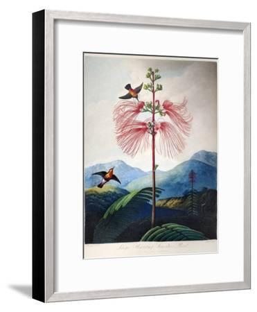 Thornton: Sensitive Plant-Joseph Constantine Stadler-Framed Giclee Print