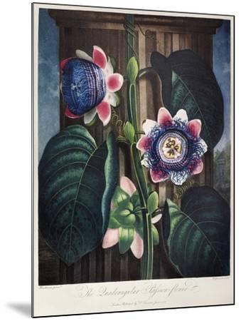 Thornton: Passion-Flower-James, The Elder Hopwood-Mounted Giclee Print