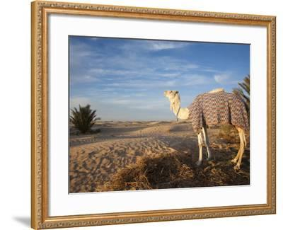 Great Dune and Camel, Douz, Sahara Desert, Tunisia-Walter Bibikow-Framed Photographic Print