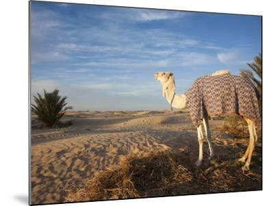 Great Dune and Camel, Douz, Sahara Desert, Tunisia-Walter Bibikow-Mounted Photographic Print