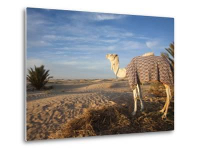 Great Dune and Camel, Douz, Sahara Desert, Tunisia-Walter Bibikow-Metal Print