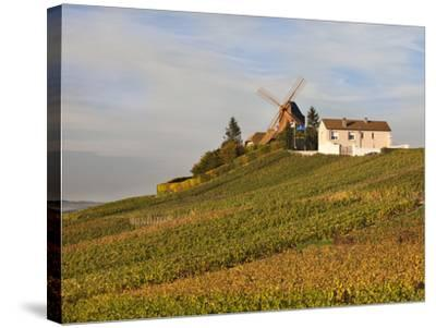 Windmill and Vineyards, Verzenay, Champagne Ardenne, Marne, France-Walter Bibikow-Stretched Canvas Print