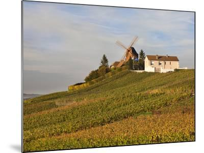 Windmill and Vineyards, Verzenay, Champagne Ardenne, Marne, France-Walter Bibikow-Mounted Photographic Print