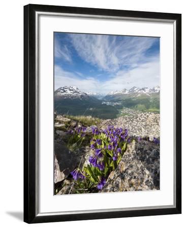 Alpine Flowers and Views of Celerina and St. Moritz from Atop Muottas Muragl, Switzerland-Michael DeFreitas-Framed Photographic Print