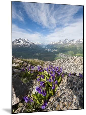 Alpine Flowers and Views of Celerina and St. Moritz from Atop Muottas Muragl, Switzerland-Michael DeFreitas-Mounted Photographic Print