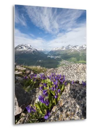 Alpine Flowers and Views of Celerina and St. Moritz from Atop Muottas Muragl, Switzerland-Michael DeFreitas-Metal Print