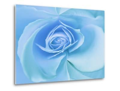 Close-Up of a Blue Rose-Adam Jones-Metal Print