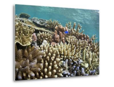 Scuba Diving, Fiji-Douglas Peebles-Metal Print