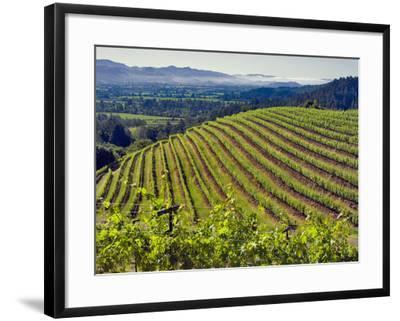 Newton Vineyard, Napa Valley, California, Usa-Janis Miglavs-Framed Photographic Print