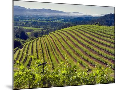 Newton Vineyard, Napa Valley, California, Usa-Janis Miglavs-Mounted Photographic Print