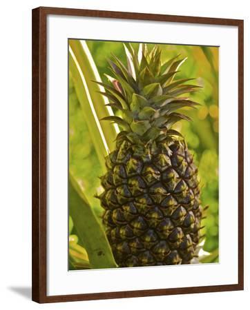 Molokai, Hawaii, Usa-Connie Bransilver-Framed Photographic Print