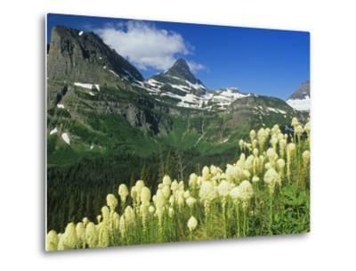 Beargrass Near Logan Pass in Gacier National Park, Montana, Usa-Chuck Haney-Metal Print