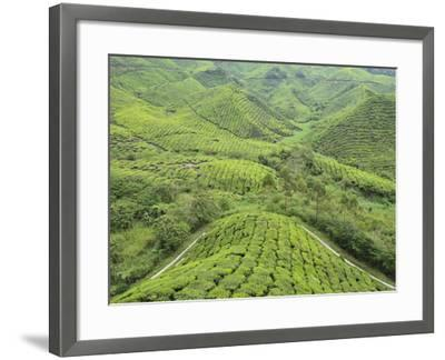 Tea Plantation, Cameron Highlands, Perak, Malaysia, Southeast Asia, Asia-Jochen Schlenker-Framed Photographic Print