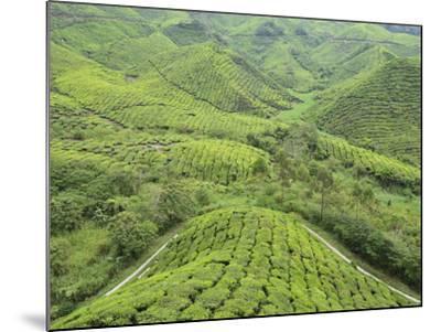 Tea Plantation, Cameron Highlands, Perak, Malaysia, Southeast Asia, Asia-Jochen Schlenker-Mounted Photographic Print