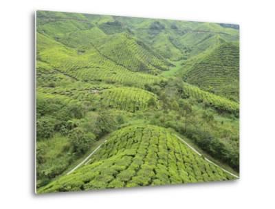 Tea Plantation, Cameron Highlands, Perak, Malaysia, Southeast Asia, Asia-Jochen Schlenker-Metal Print