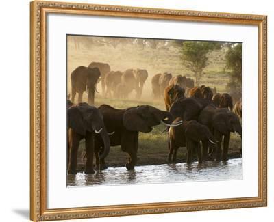 Elephants (Loxodonta Africana), Lualenyi Game Reserve, Kenya, East Africa, Africa-Sergio Pitamitz-Framed Photographic Print
