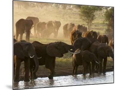 Elephants (Loxodonta Africana), Lualenyi Game Reserve, Kenya, East Africa, Africa-Sergio Pitamitz-Mounted Photographic Print