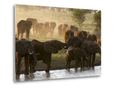 Elephants (Loxodonta Africana), Lualenyi Game Reserve, Kenya, East Africa, Africa-Sergio Pitamitz-Metal Print