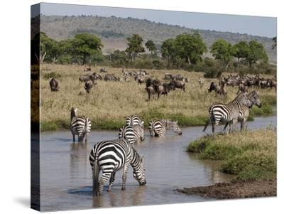 Zebra (Equus Quagga), Masai Mara, Kenya, East Africa, Africa-Sergio Pitamitz-Stretched Canvas Print