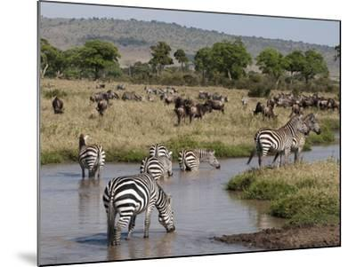 Zebra (Equus Quagga), Masai Mara, Kenya, East Africa, Africa-Sergio Pitamitz-Mounted Photographic Print
