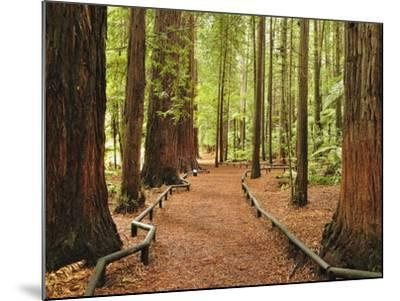 Walkway, the Redwoods, Rotorua, Bay of Plenty, North Island, New Zealand, Pacific-Jochen Schlenker-Mounted Photographic Print
