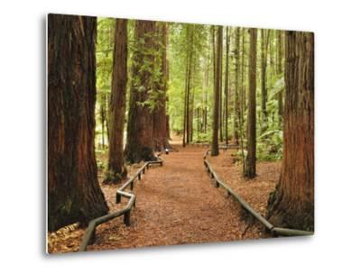 Walkway, the Redwoods, Rotorua, Bay of Plenty, North Island, New Zealand, Pacific-Jochen Schlenker-Metal Print