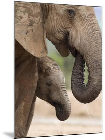 Elephant (Loxodonta Africana) and Baby, Addo Elephant National Park, Eastern Cape, South Africa-Ann & Steve Toon-Mounted Photographic Print