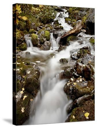 Cascade at Pioneer Falls, Alaska, United States of America, North America-James Hager-Stretched Canvas Print