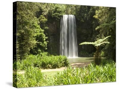 Millaa Millaa Falls, Atherton Tablelands, Queensland, Australia, Pacific--Stretched Canvas Print