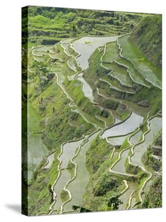 Mud-Walled Rice Terraces of Ifugao Culture, Banaue, UNESCO World Heritage Site, Luzon, Philippines--Stretched Canvas Print