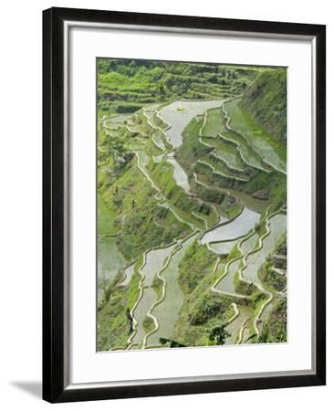 Mud-Walled Rice Terraces of Ifugao Culture, Banaue, UNESCO World Heritage Site, Luzon, Philippines--Framed Photographic Print