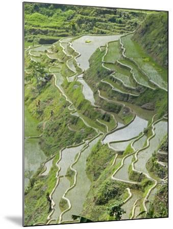 Mud-Walled Rice Terraces of Ifugao Culture, Banaue, UNESCO World Heritage Site, Luzon, Philippines--Mounted Photographic Print