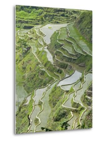Mud-Walled Rice Terraces of Ifugao Culture, Banaue, UNESCO World Heritage Site, Luzon, Philippines--Metal Print