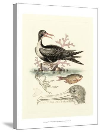 Aquatic Birds I-George Edwards-Stretched Canvas Print