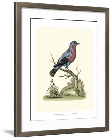 Poised in Nature IV-George Edwards-Framed Art Print