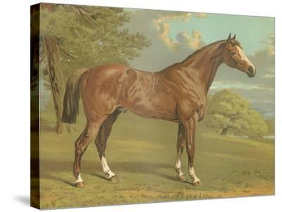 Cassell's Thoroughbred I-Cassell-Stretched Canvas Print