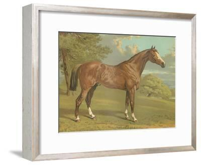 Cassell's Thoroughbred I-Cassell-Framed Art Print