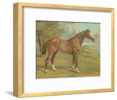 Cassell's Thoroughbred I-Cassell-Framed Art Print