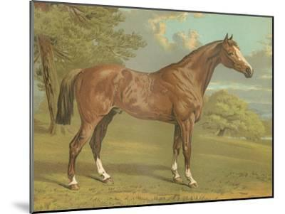 Cassell's Thoroughbred I-Cassell-Mounted Art Print