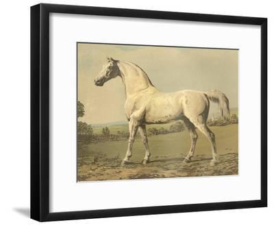 Cassell's Thoroughbred II-Cassell-Framed Art Print