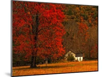 Farm House on a Autumn Morn'-Danny Head-Mounted Art Print