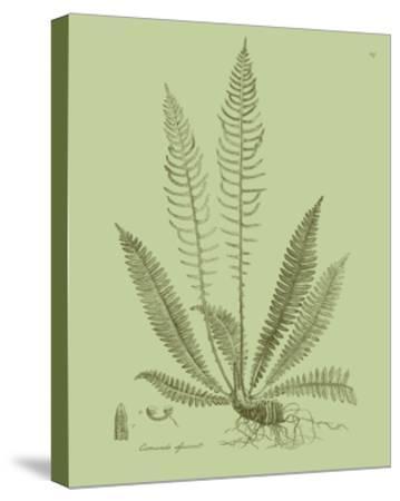 Fresh Ferns I-Samuel Curtis-Stretched Canvas Print
