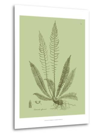 Fresh Ferns I-Samuel Curtis-Metal Print