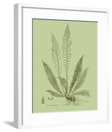 Fresh Ferns I-Samuel Curtis-Framed Art Print