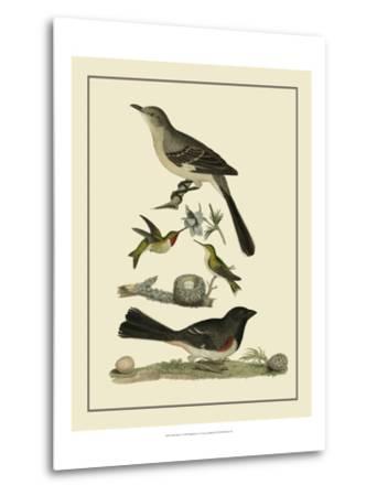 Bird Family V-A^ Lawson-Metal Print