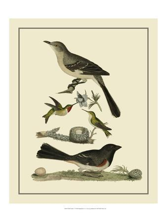 Bird Family V-A^ Lawson-Art Print