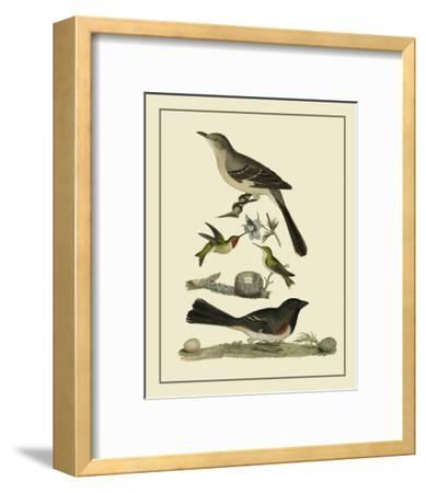Bird Family V-A^ Lawson-Framed Art Print