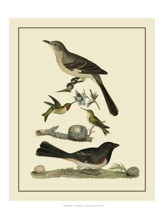 Bird Family V-A^ Lawson-Art Print