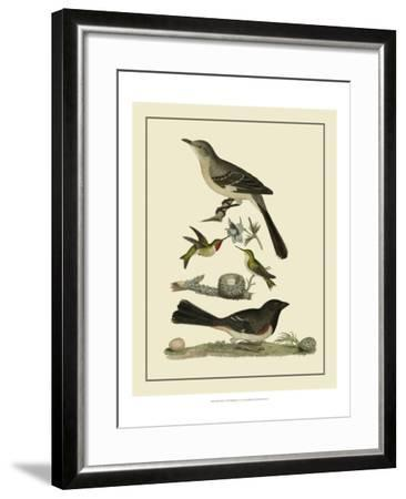 Bird Family V-A^ Lawson-Framed Art Print